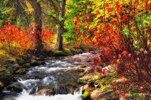 Фото бесплатно Крик, природа, осень