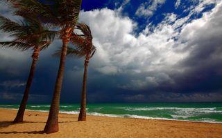 Заставки море, пляж, деревья