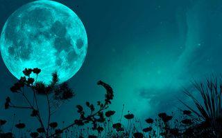Фото бесплатно Луна, трава, ночь
