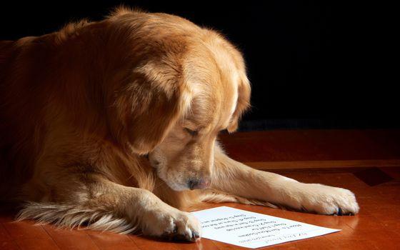 Фото бесплатно собака, читает, листок