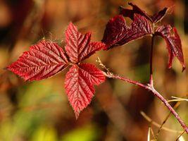 Заставки Осень, лист, прогулки