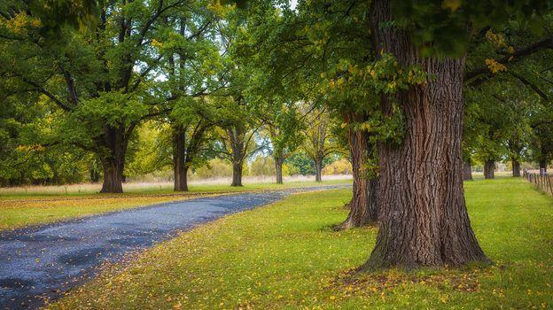 Фото бесплатно деревья, осень дорога, дорога