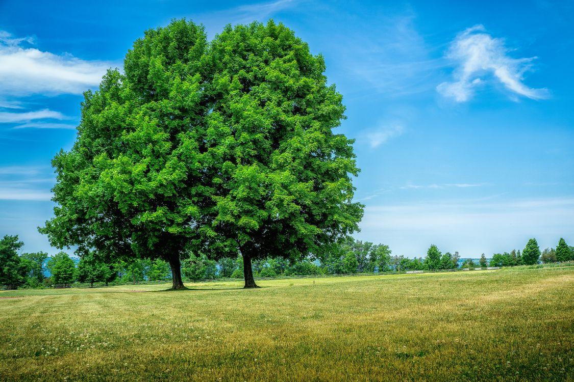 Фото бесплатно поле, деревья, природа, пейзаж, пейзажи