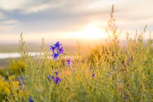 Photo free countryside, horizon, wild flower