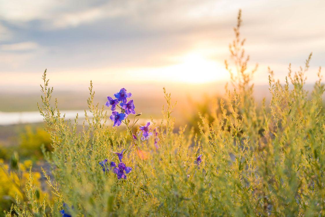 Обои трава, горизонт, растение, небо, восход, закат солнца, поле, луг, прерия, солнечный лучик, утро, цветок, осень, сельское хозяйство, флора на телефон | картинки природа