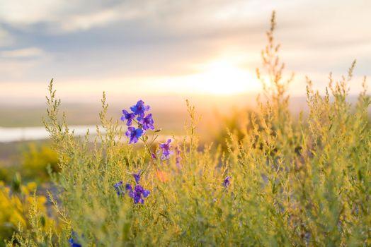 Фото бесплатно сельская местность, горизонт, дикий цветок