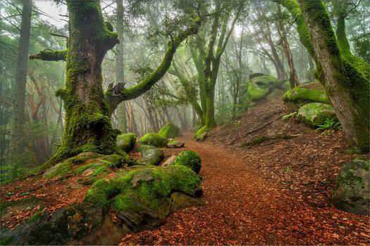 Фото бесплатно Рок тропа в парке Санборн-Скайлайн Каунти, Санта-Круз, лес
