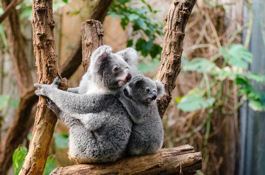 Фото бесплатно природа дикая, зоопарк, мех