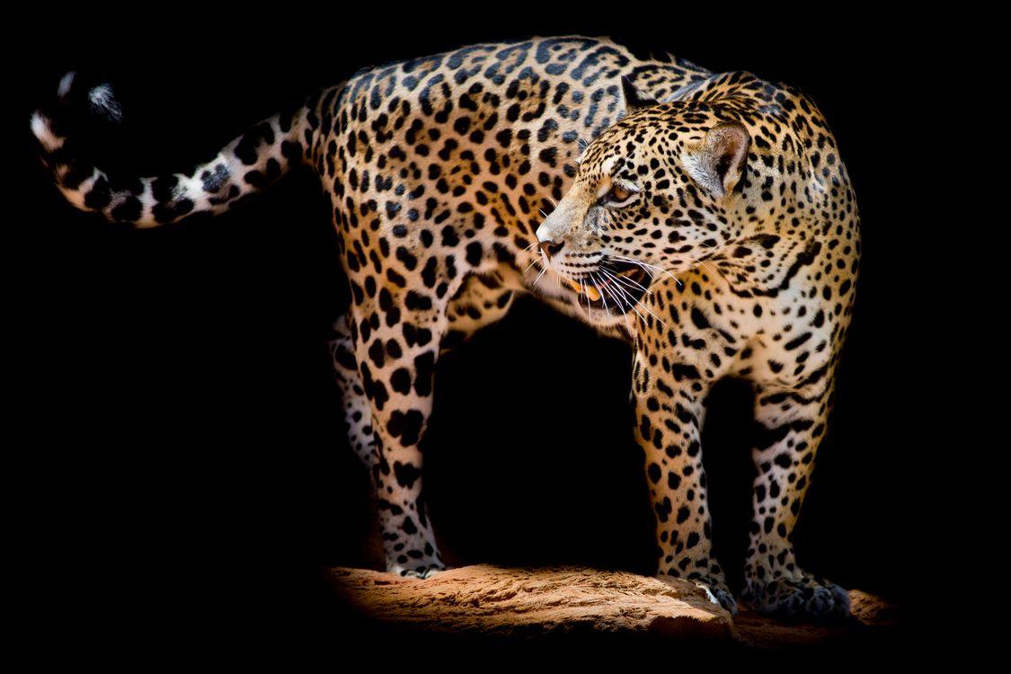 Фото хищник бесплатно, животное и без регистрации