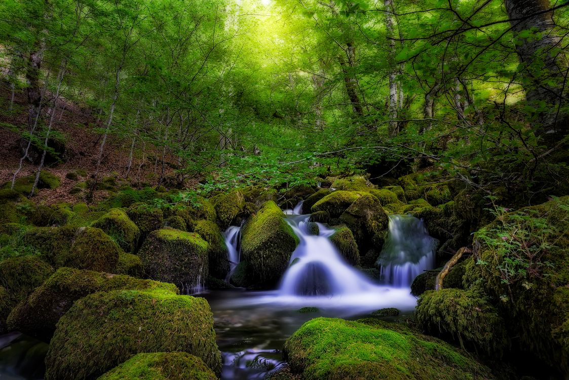 Free photo forest, river, trees - to desktop
