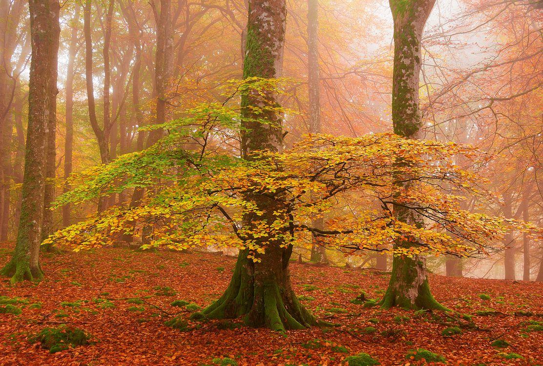 Обои осень, листопад, старые деревья, земля в листьях, парк, деревья, осенние листья картинки на телефон