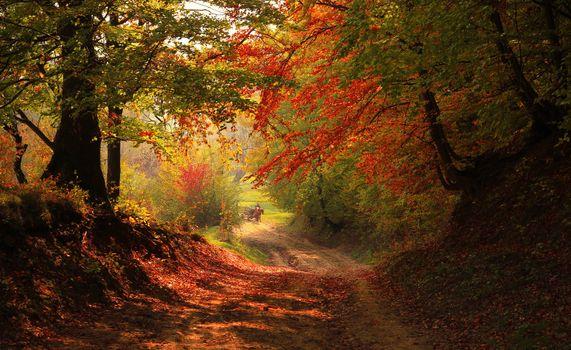 Фото бесплатно осень, пейзаж, лист, листья, природа, деревья, дорога, тропа