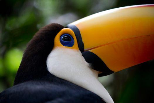 Фото бесплатно животные, дикие животные, птицы