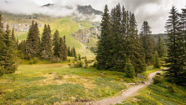 Зелёные горы · бесплатное фото