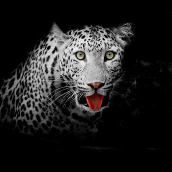 Free download leopard, predator screensaver