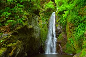 Photo free forest, river, Japan