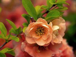 Пришла весна · бесплатное фото