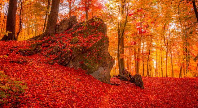Photo free autumn, autumn forest, Basel