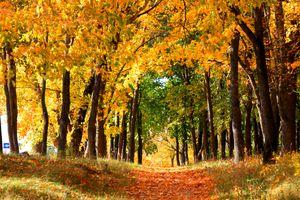 Бесплатные фото осенний листопад,тропинка,парк,деревья,листья