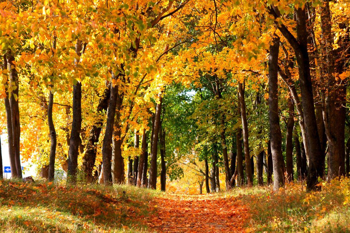 Фото бесплатно осенний листопад, тропинка, парк, деревья, листья, природа