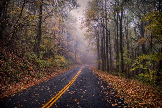Фото бесплатно деревья, разметка, пейзаж