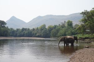 Фото бесплатно лес, охлаждение, Азия