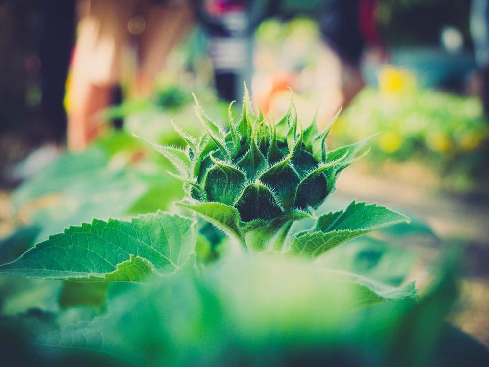 Фото природа растение фотография - бесплатные картинки на Fonwall