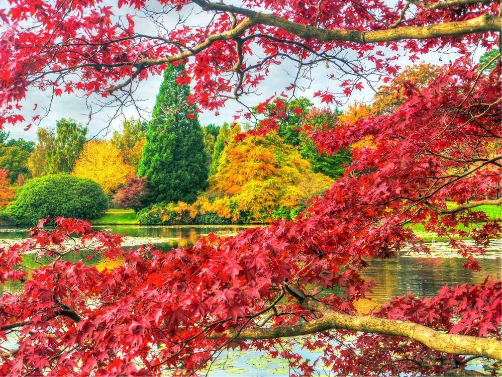 Обои Шеффилд Парк, Sheffield Park, Англия картинки на телефон