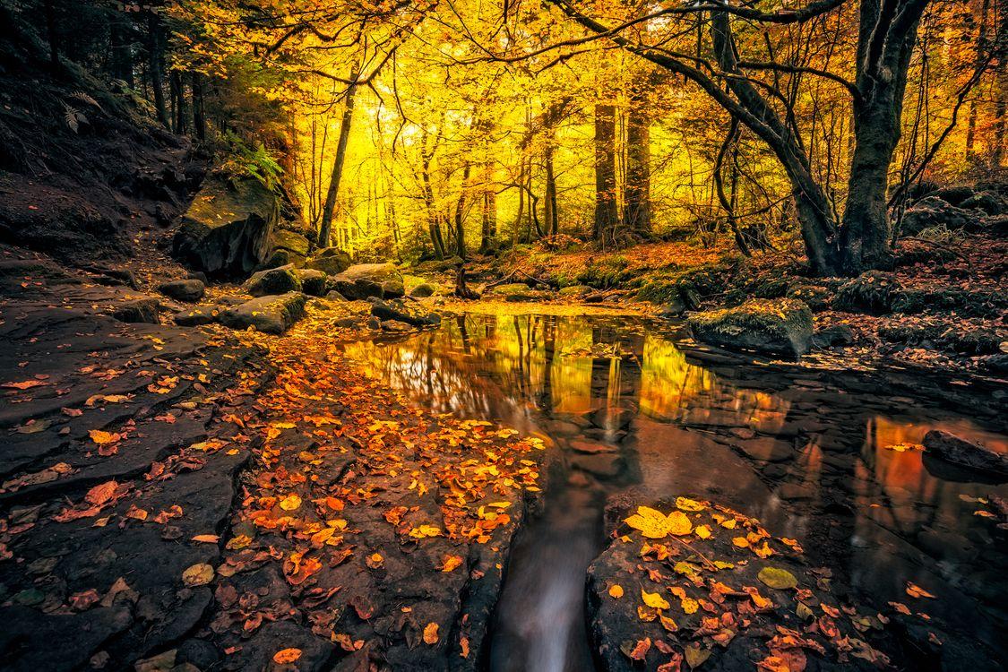 Фото бесплатно autumn, creek, forest - на рабочий стол