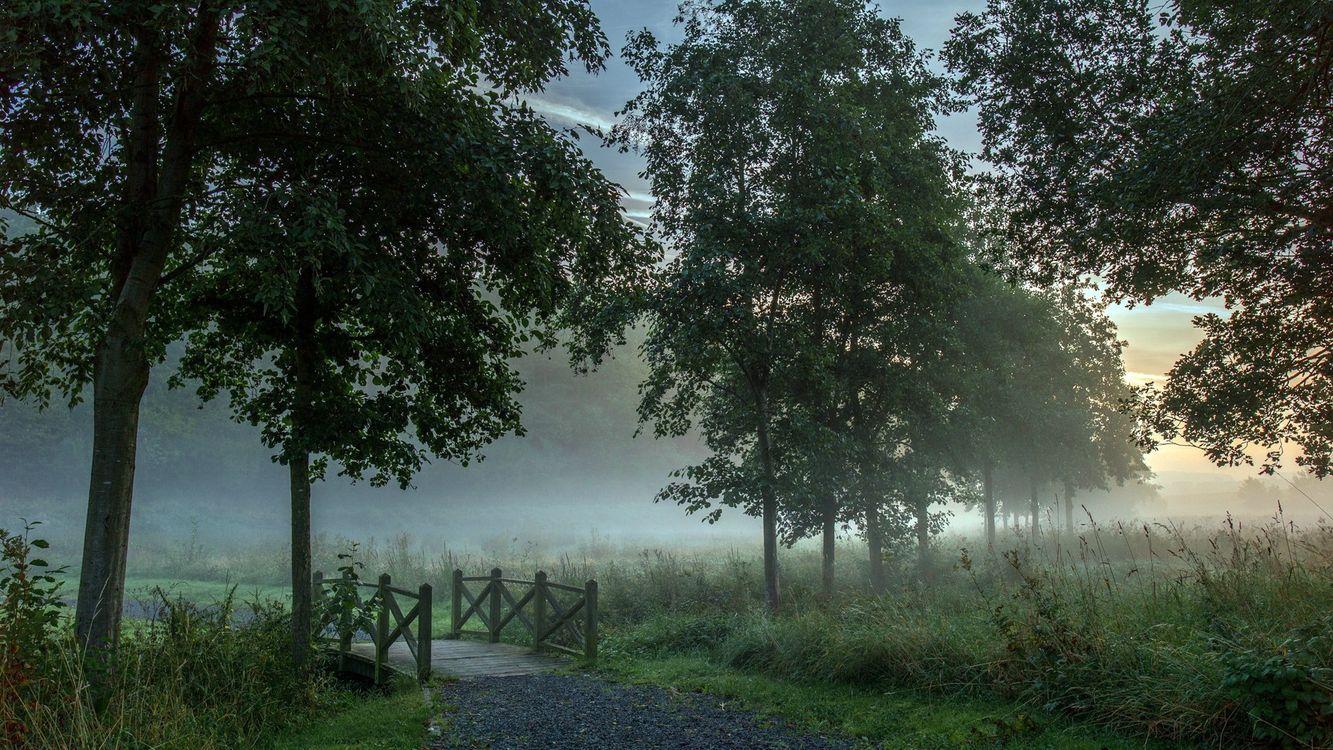 Мостик через ручей · бесплатное фото