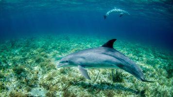 Дельфин на дне морском · бесплатное фото