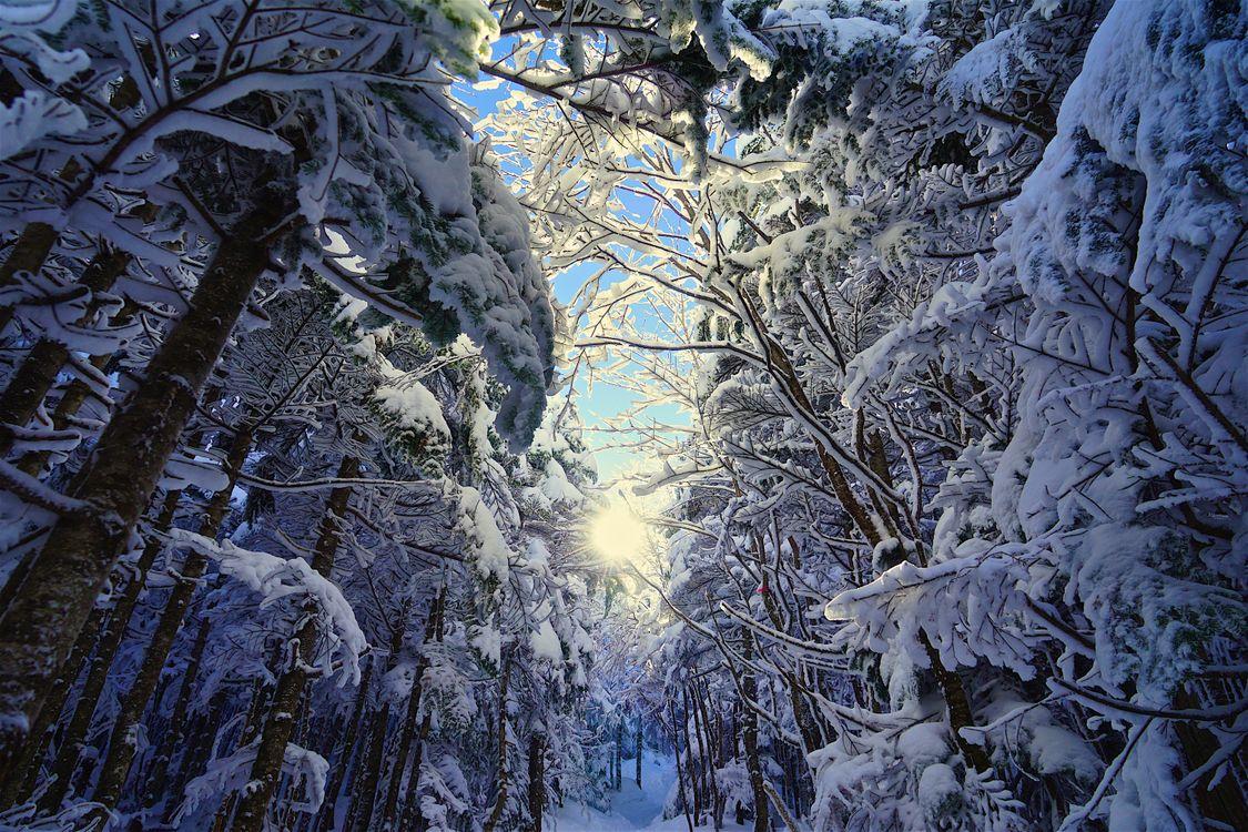 Фото бесплатно зимний лес, зима, деревья, ветки деревьев, солнце, солнечные лучи, деревья в снегу, природа, пейзаж, сказочная зима, пейзажи