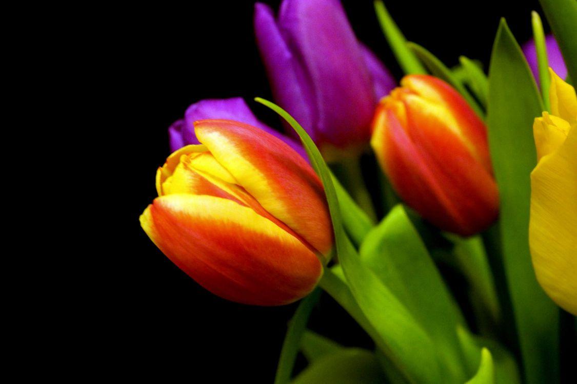 Удивительные тюльпаны · бесплатное фото