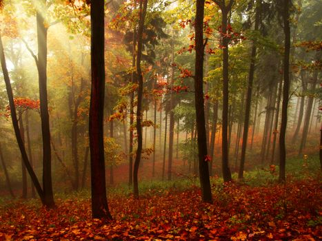 Photo free autumn, beams, fog