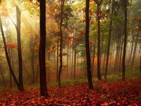 Фото бесплатно осень, лучи, туман