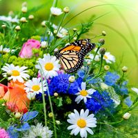 Фото бесплатно бабочка, букет, цветы