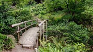 Фото бесплатно леса, джунгли, pustynia
