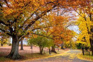 Бесплатные фото 1 Downing Park,Newburgh,New York,парк,осень,деревья,осенние краски