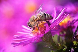 Бесплатные фото цветок, пчела, насекомое, макро