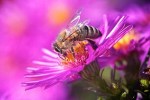Фото бесплатно цветок, пчела, насекомое, макро