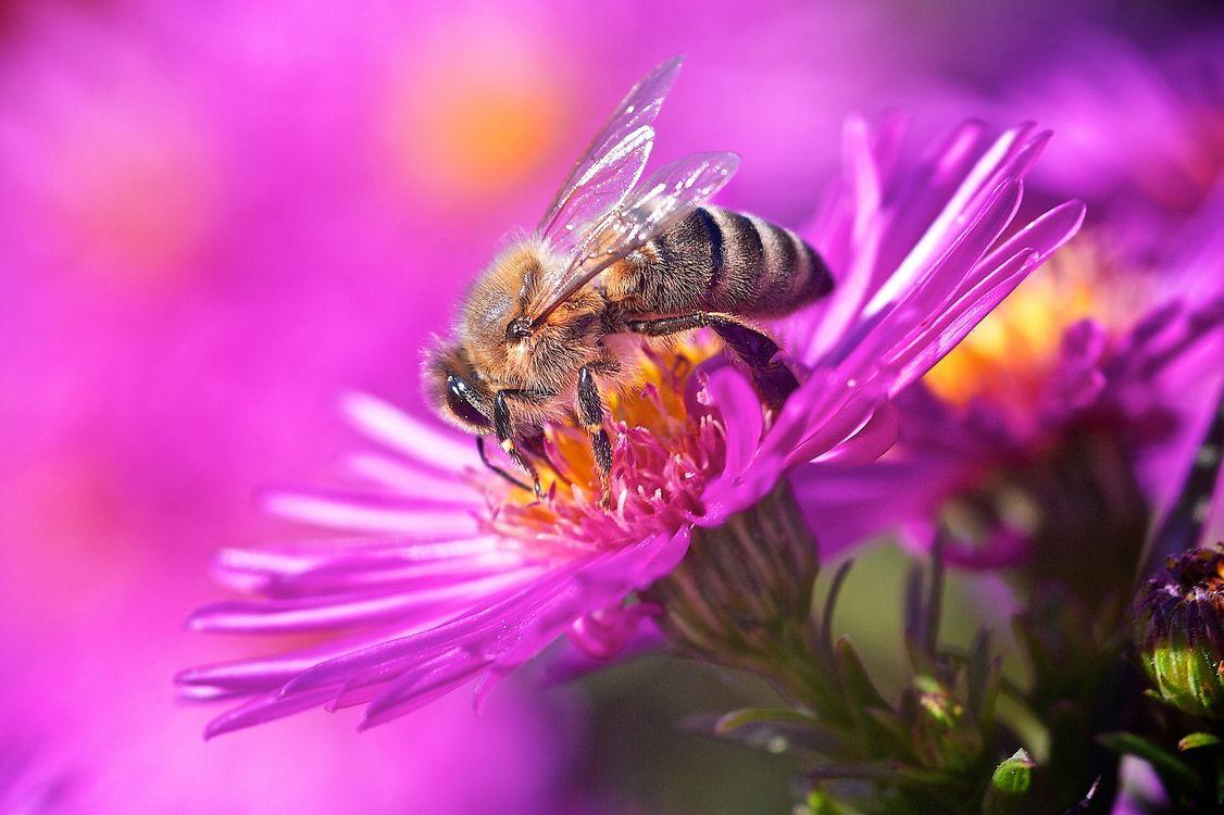 фото цветы с пчелами можно сделать