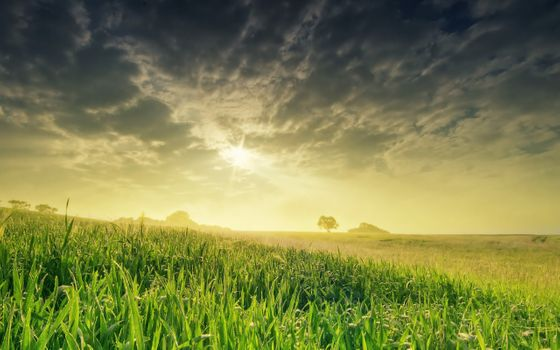 Photo free landscape, green grass, Cirrus clouds