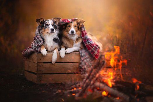Собаки греются у костра · бесплатное фото
