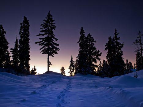 Фото бесплатно пейзаж, деревья, следы