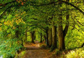 Бесплатные фото лес,деревья,осень,тропинка,природа,пейзаж