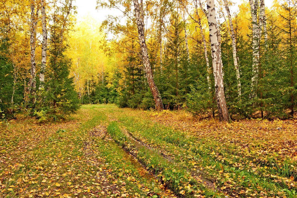 Фото бесплатно осенние цвета, цвета осени, осенний лес - на рабочий стол