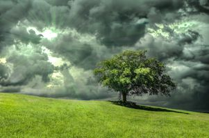Бесплатные фото поле, небо, облака, холм, солнечные лучи, дерево, пейзаж