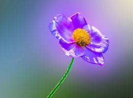 Фото бесплатно Purple flower, цветок, цветы