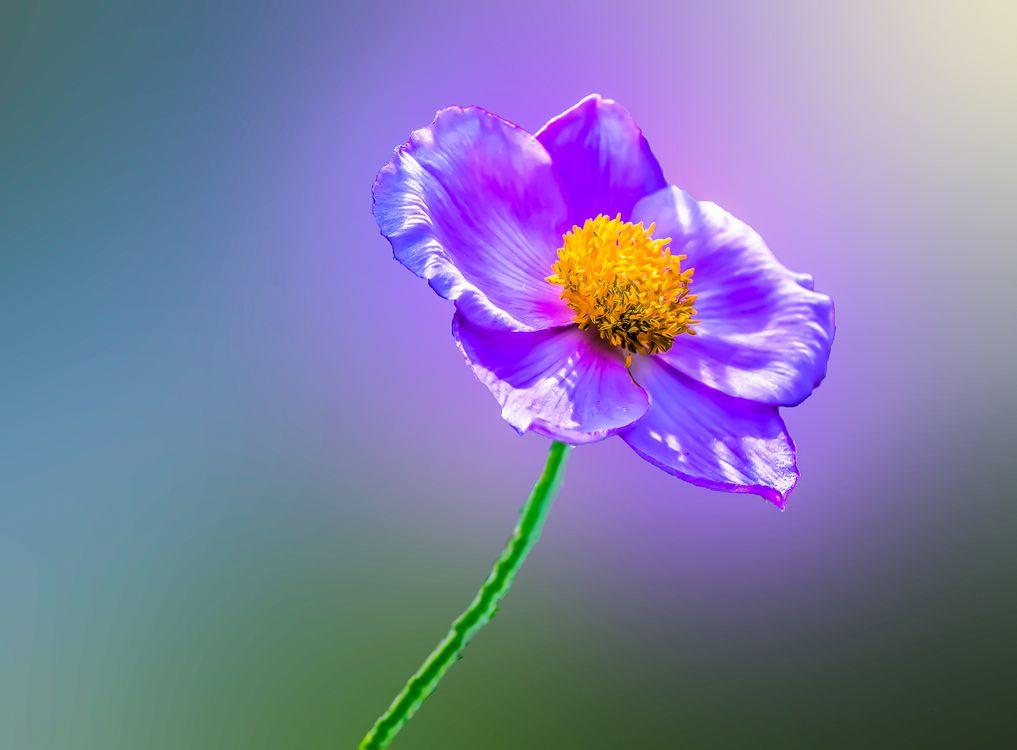 Обои Purple flower, цветок, цветы, макрос, макро, флора картинки на телефон