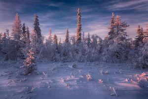 Лесотундра России · бесплатное фото